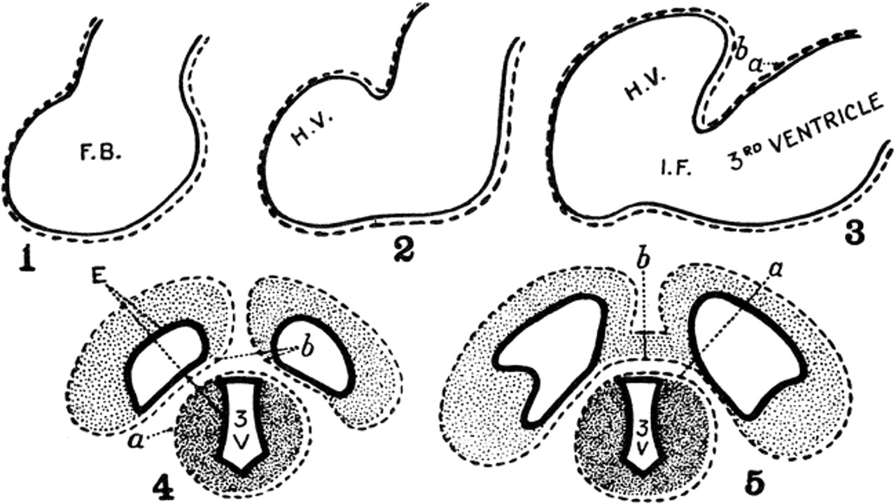 The Evolutionary and Embryologic Basis for the Development and ...