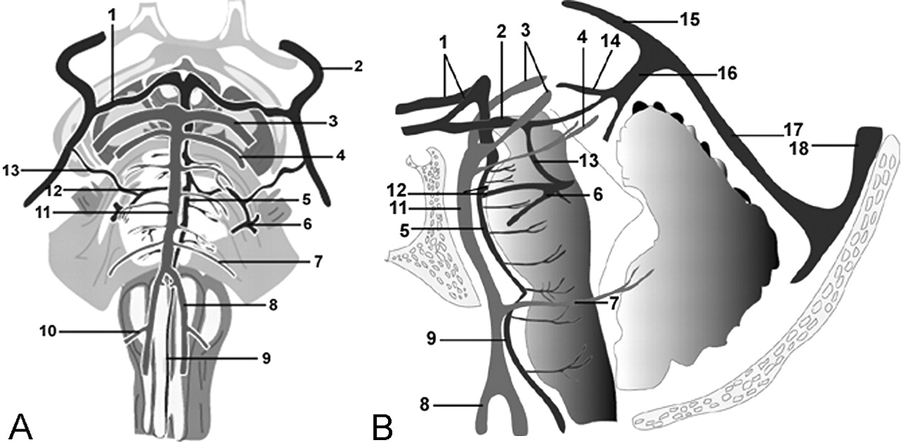Anatomy and Frequency of Large Pontomesencephalic Veins on 3D CT ...