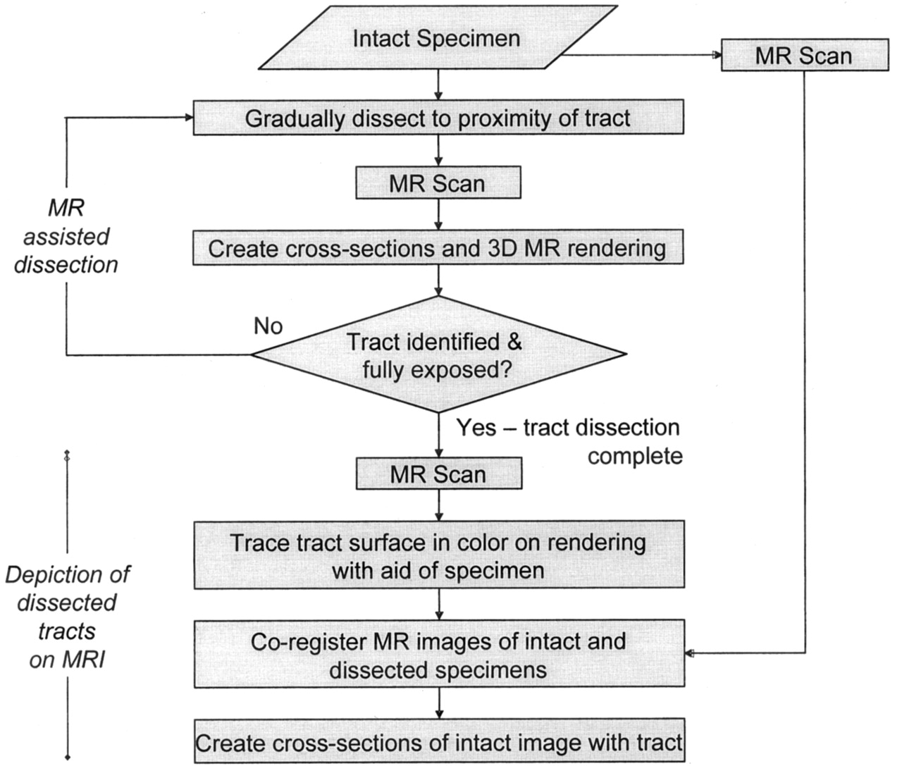 Anatomic Dissection Tractography A New Method For Precise Mr
