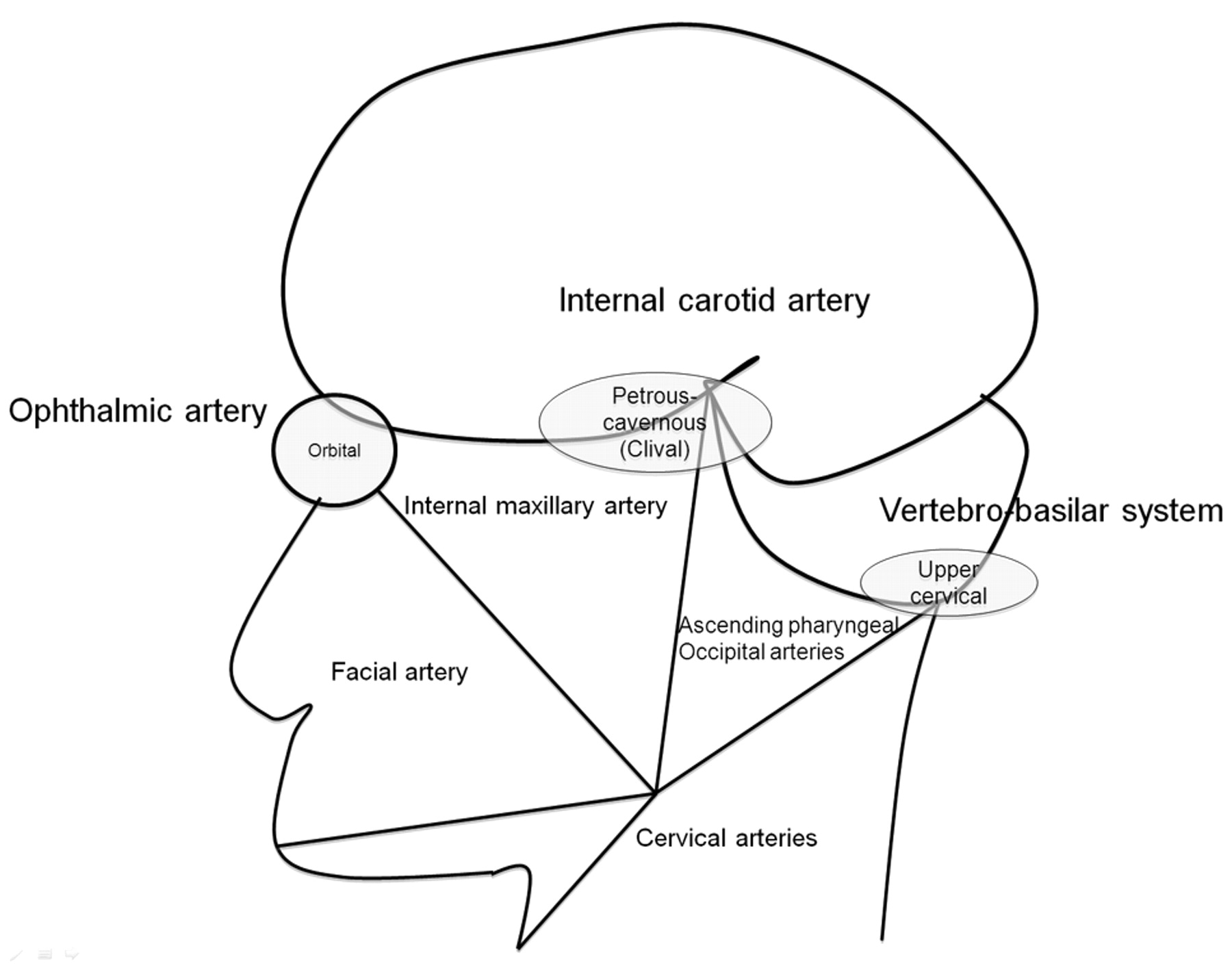 Dangerous Extracranial–Intracranial Anastomoses and Supply to the ...