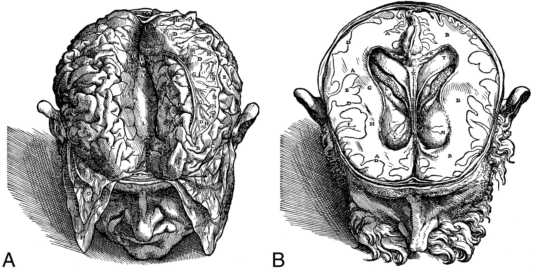 Andreas Vesalius and Thomas Willis: Their Anatomic Brain ...