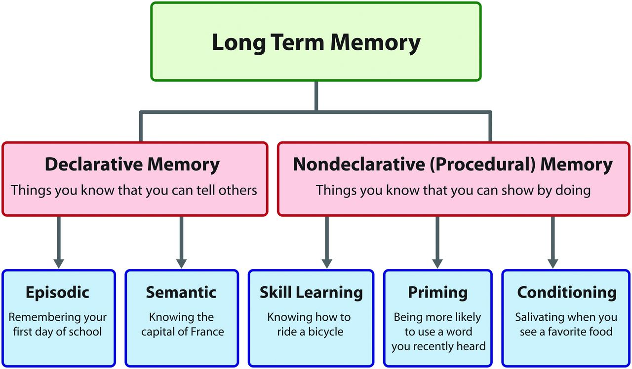 memory part 1  overview