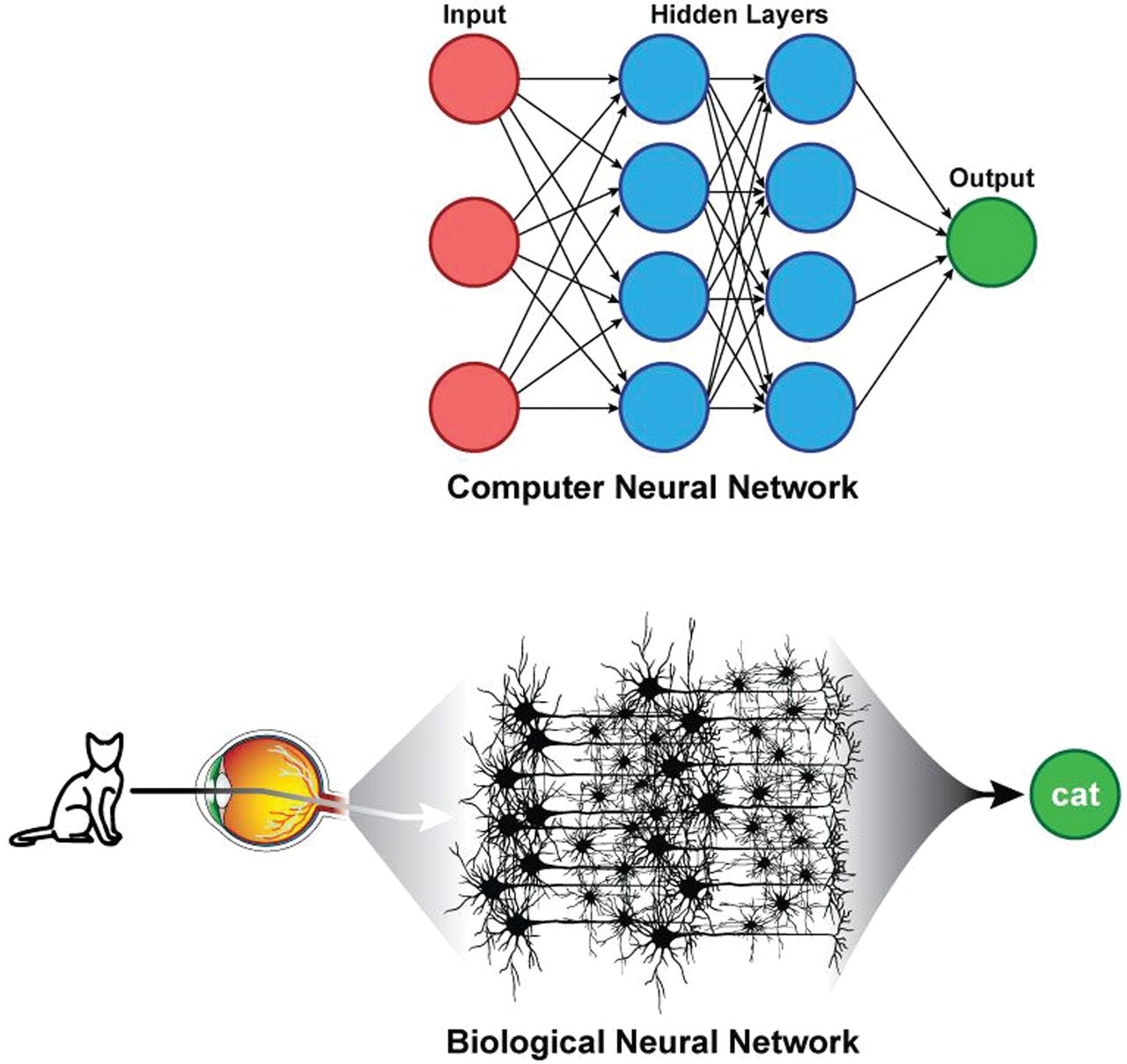 Deep Learning in Neuroradiology | American Journal of Neuroradiology